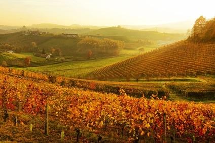 Relax in Piemonte tra i nostri vigneti